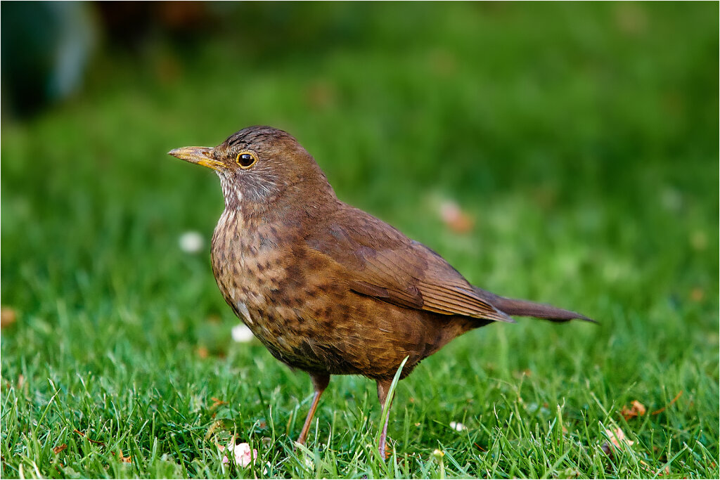 5190093CaptOneMai-19-2016.jpg