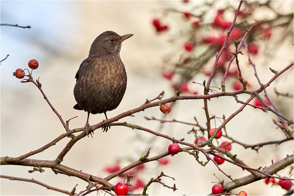Wild lebende Vögel