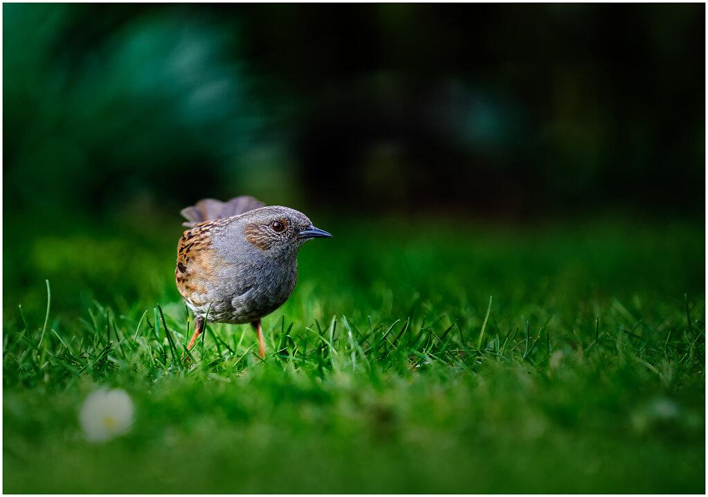 Verschiedene Singvögel