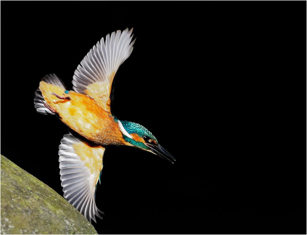 Eisvogel-Kingfisher-Olympus-E-M1MarkII-9151817-Bearbeitet.jpg