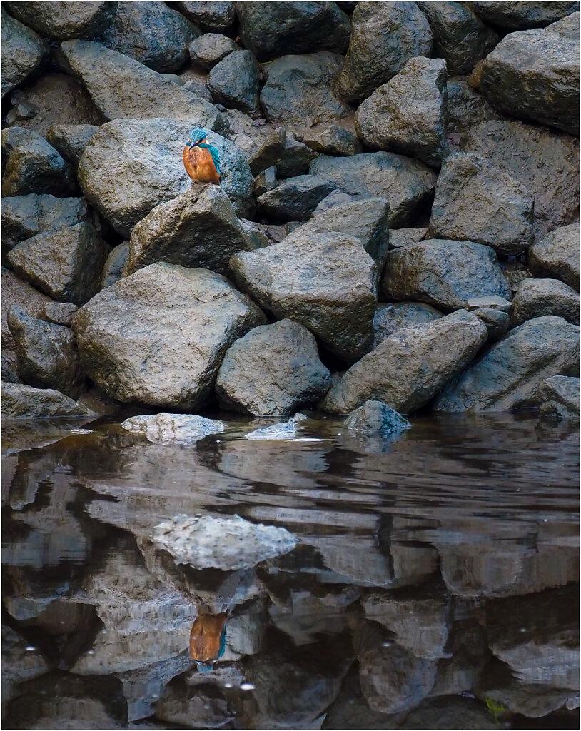 Eisvogel-Kingfisher-Olympus-E-M1MarkII-9160502-Bearbeitet.jpg